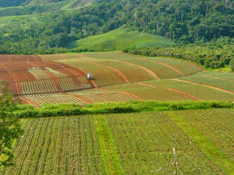 Reforestación y conservación de recursos forestales.